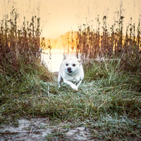 Dog - Photography