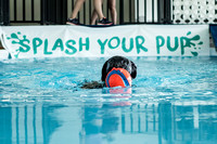 2016 Splash Your Pup Grand Opening
